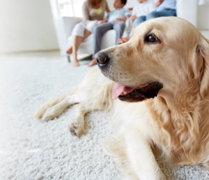 Pet Stain Removal & Treatment